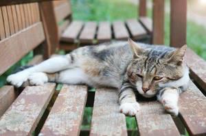 Katze dösend