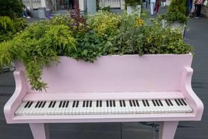 Klavier umfunktioniert zu einem riesigen Blumentopf