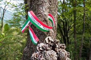 Klebeband in italienischen Flaggenfarben hängt an einem Baum