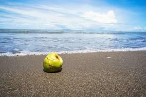 Kleine Kokosnuss im nassen Sand am Strand mit Meerblick (Flip 2019)
