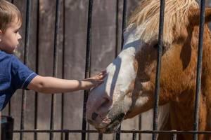 Kleiner Junge streichelt ein Pferd im Zoo