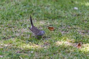 Kleiner Vogel pickt im Gras nahe des Riviera L