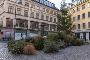 Knut: Weihnachtsbäume auf offener Straße entsorgen