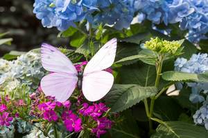 Künstlicher Schmetterling