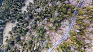 Ländliche Straße schlägt eine Schneise durch den Kieferwald. Luftbildaufnahme