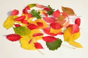 Laub im Herbst