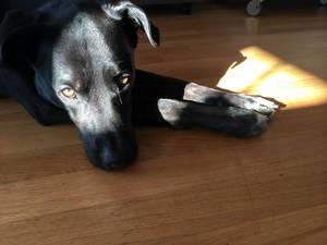 Lichtstrahl beleuchtet das Gesicht meines Hundes