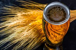 Light beer with wheat spikelets
