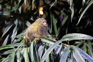 Little monkey standing on a green tree in Budapest Tropicarium