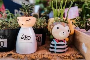 Little pots of plants, close up shot