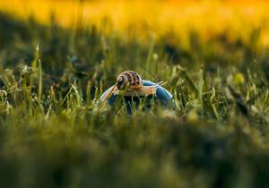 Little snail in the grass