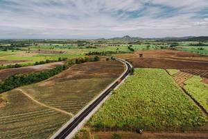 Luftaufnahme der Zuckerrohrfelder in Sagay