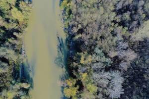 Luftaufnahme vom Fluss Arges in Rumänien mit Bäumen auf beiden Seiten