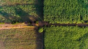 Luftaufnahme von Zuckerrohrfeldern mit Straße in Hinigaran auf der philippinischen Insel Negros