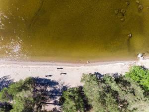 Luftbild vom Sandstrand der Insel Kelvenne mit gelblichem Wasser des Päijännesee in Finnland