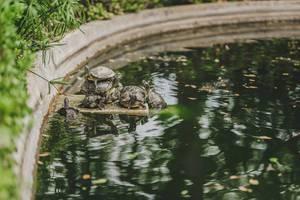 Lustige Wasserschildkröten sitzen aufeinander an einem Brunnen
