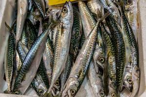 Mackerel on fish market