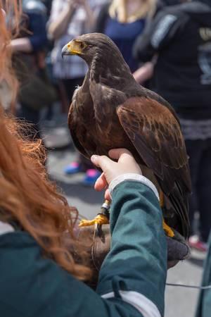 Mädchen streichelt einen Adler