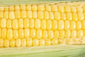 Makrobild eines Maiskolben