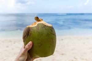 Männerhand hält angeschnittene grüne Kokosnuss am Strand auf den Seychellen vor blauem Meer des Indischen Ozeans