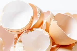 Many broken eggshell on white background