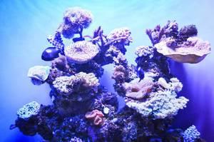Marine Leben unter Wasser