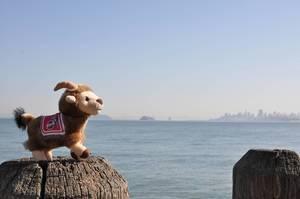 Maskottchen Geißbock Hennes des 1. FC Köln auf einem Holzpfeiler mit Blick auf die Bucht von San Francisco