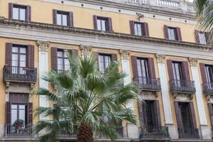 Mediterrane Architektur im klassizistischen Baustil mit Fensterläden aus Holz hinter Palmenblätter am Plaza Reial in Barcelona, Spanien