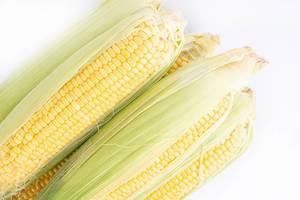 Mehrere frischgepflückte Maiskolben, isoliert auf weißem Hintergrund