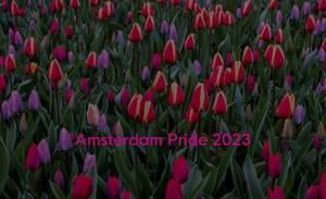 Mehrfarbige und farbenfrohe rosa und violette Tulpen in der Keukenhof Gartenanlage, mit dem Bildtitel Amsterdam Pride 2023