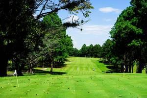 Menschen laufen über einen schönen mit Bäumen umwachsenen Golfplatz