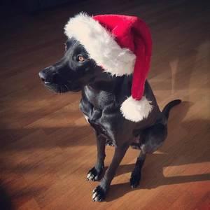 Merry Christmas: Dog Edition