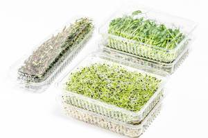 Micro-green onions, alfalfa, radishes, peas and thyme in plastic packages on a white background (Flip 2019)