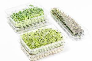 Micro-green onions, alfalfa, radishes, peas and thyme in plastic packages on a white background