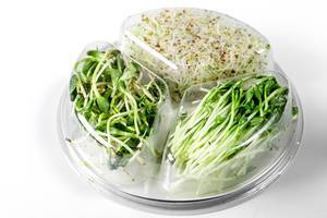 Micro-greens of onions, peas and sunflowers in a plastic container (Flip 2020)