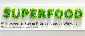 Microgreens plant the word Superfood