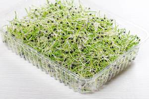 Microgreens sprouts of onion in plastic box on white wooden background (Flip 2019)
