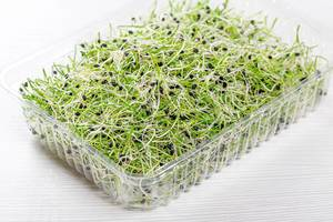 Microgreens sprouts of onion in plastic box on white wooden background
