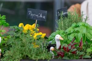 Mini-Paprika, Rosmarin und andere Küchenpflanzen