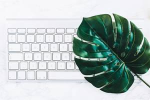 Minimalismus aus der Vogelperspektive: Tastatur und ein grünes Monstera-Blatt