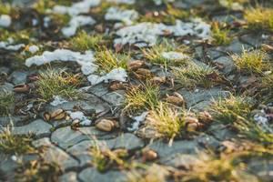 Mit Glasbüscheln bewachsener Steinboden mit letzten, noch nicht geschmolzenen Schneeflecken
