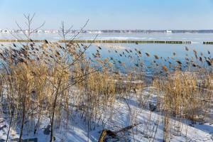 Mit Schnee bedeckte Vegetation am Müggelsee