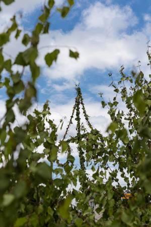 Mittsommerbaum  auf Midsommar Fest in Köln