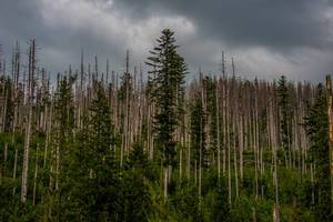 Moody Forest Scene In High Tatra Mountain Park (Flip 2019)