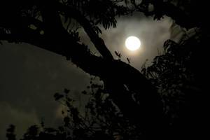 Moonlight revealing a tree
