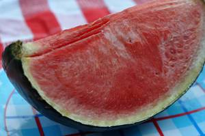 Mouldy water melon