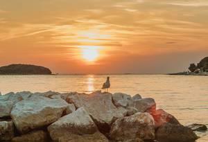 Möwe auf Felsen bei Sonnenuntergang