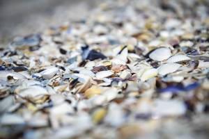 Muscheln an der Küste