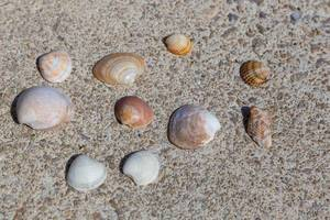 Muschelschalen verschiedener Formen und Größen
