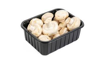 Mushrooms in the box above white background